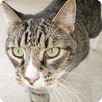 Adopt A Pet :: Zorro - Umatilla, FL