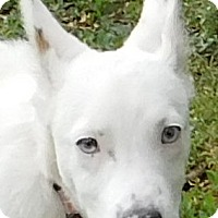 Adopt A Pet :: Abigail - MINNEAPOLIS, KS