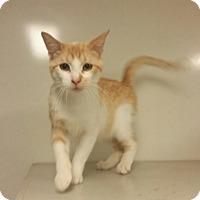 Adopt A Pet :: C13 - Indianola, IA
