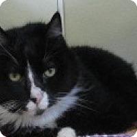 Adopt A Pet :: MR. SPUNKERS - Aiken, SC