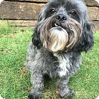 Adopt A Pet :: Bruno - Atlanta, GA