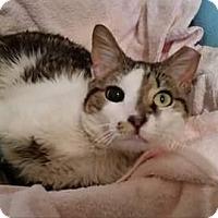 Adopt A Pet :: Jude - Darby, PA