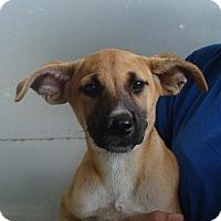 Adopt A Pet :: Spice - Oviedo, FL