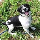 Adopt A Pet :: Elaria