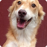 Adopt A Pet :: Daisy - Pennigton, NJ