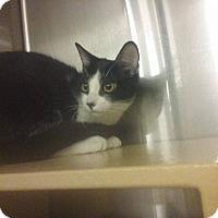 Adopt A Pet :: Tyme - Lancaster, CA