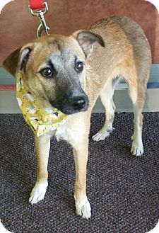 Shepherd (Unknown Type) Mix Puppy for adoption in Lyles, Tennessee - Lola