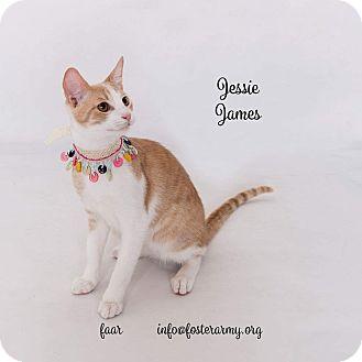 Domestic Shorthair Kitten for adoption in Riverside, California - Jesse James