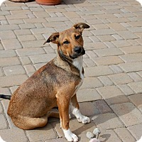 Adopt A Pet :: Derringer - Spring, TX