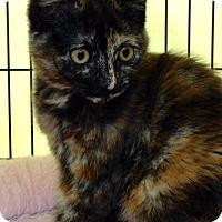 Adopt A Pet :: Misty - San Jose, CA