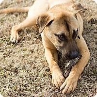 Adopt A Pet :: HAMILTON - Moosup, CT