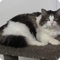 Adopt A Pet :: Bubby - Jackson, MO