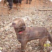 Adopt A Pet :: hersey - Wedowee, AL