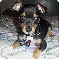Adopt A Pet :: Milo - Villa Rica, GA