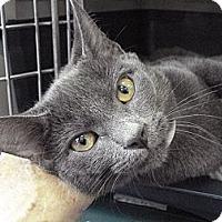 Adopt A Pet :: Mona - Brooklyn, NY