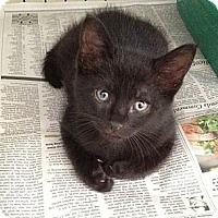 Adopt A Pet :: Hershey - Island Park, NY