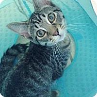 Adopt A Pet :: Montoya - Byron Center, MI