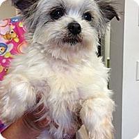 Adopt A Pet :: Peep - Santa Monica, CA