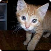 Adopt A Pet :: Sally - Irvine, CA