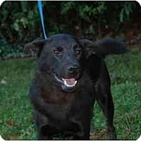 Adopt A Pet :: Freedom - Conyers, GA
