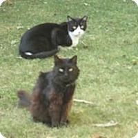 Adopt A Pet :: Jimmy and Sharpie - Sacramento, CA