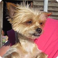 Adopt A Pet :: Tiny - Wilmington, DE