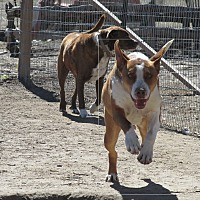 Adopt A Pet :: WOODY - Pie Town, NM