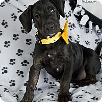 Adopt A Pet :: Onyx - San Diego, CA