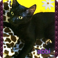 Adopt A Pet :: Abbi - Los Angeles, CA