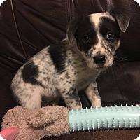 Adopt A Pet :: Judd - Ogden, UT