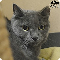 Adopt A Pet :: Miss Kitty - West Kennebunk, ME