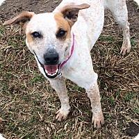 Adopt A Pet :: Riley - Woodward, OK
