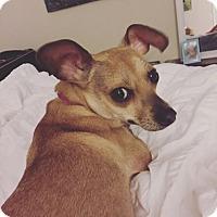 Adopt A Pet :: Chica - Austin, TX
