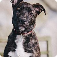 Adopt A Pet :: Mia - Portland, OR