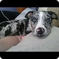 Adopt A Pet :: Quinn - Lakeville, MN