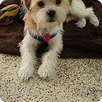 Adopt A Pet :: Brady - Thousand Oaks, CA