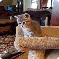 Adopt A Pet :: Princess Daisy - Berkeley Hts, NJ