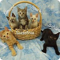 Adopt A Pet :: Spark - Elkhorn, WI