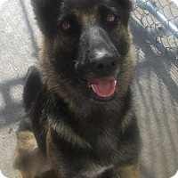 Adopt A Pet :: Debra - Clear Lake, IA