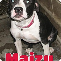 Adopt A Pet :: #180 Maizy - sponsored - Lawrenceburg, KY
