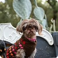Adopt A Pet :: Cookie - Auburn, CA