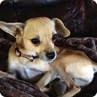 Adopt A Pet :: OSCAR - Spring Valley, NY