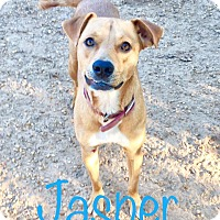 Adopt A Pet :: Jasper - Fort Valley, GA