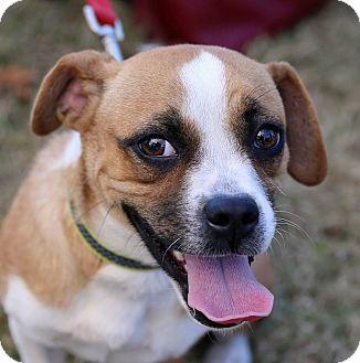 Pug/Dachshund Mix Dog for adoption in Suwanee, Georgia - Peaches