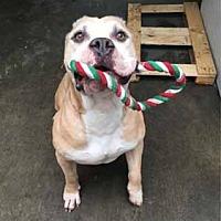 Adopt A Pet :: Mufasa - Valley Center, CA