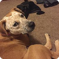 Adopt A Pet :: Leia - Manhattan, KS