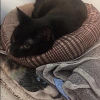 Adopt A Pet :: Jet - Port Clinton, OH