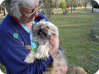 Tibetan Terrier Dog for adoption in Daleville, Alabama - Shaggy