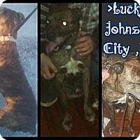 Adopt A Pet :: Lucky - Alamosa, CO