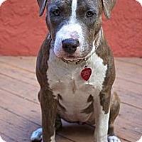 Adopt A Pet :: Ember - Sarasota, FL